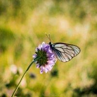 бабочка :: Арина Михайлова