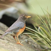 Птичка невеличка :: Андрей Михайлин