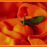 Оранжевое настроение :: tankist Алексей