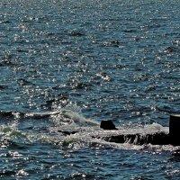 блики солнца на воде :: Александр Корчемный