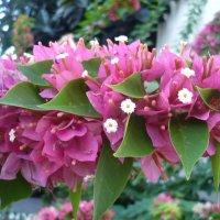 южные цветы :: натальябонд бондаренко
