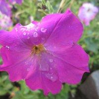 В утренней росе... :: Тамара (st.tamara)