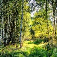 С берёзками прощается июль... :: Лесо-Вед (Баранов)