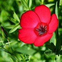 аленький цветочек :: Валерия Шамсутдинова