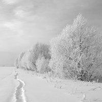 Белый январь :: Рина ***