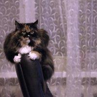 Портрет кошки на спинке кресла. :: Алексей Хаустов