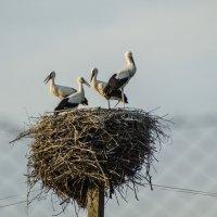 Гнездо.. :: Юрий Анипов