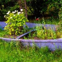 Клумба в лодке. :: Инта