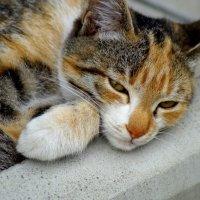 Cat :: A. SMIRNOV