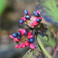 какая то не очень съедобная ягода :: Юлия Дмитриева