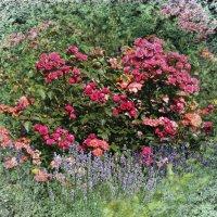 Лаванда и розы :: Nikolay Monahov