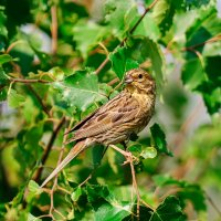 2 августа, жара, 32 градуса, даже птицы и те прячутся в тени деревьев. :: Анатолий Клепешнёв