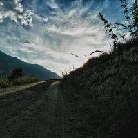 Дорожка к солнцу :: Светлана Игнатьева