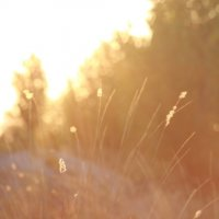 В последних лучах солнца :: Ольга Князева