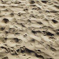 Следы на песке :: Виктор (victor-afinsky)