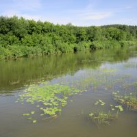 Вдоль реки зацветают кувшинки . :: Мила Бовкун