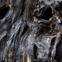 Глаза древесной бездны... :: Лесо-Вед (Баранов)