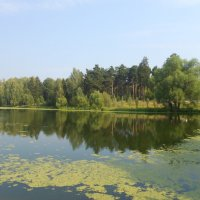 Август...засуха :: Настасья Мерчуткина-Щукина
