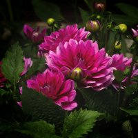 В саду... :: Елена Панькина