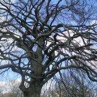 Вот такое дерево. :: Елена