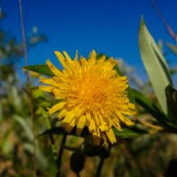 Желтый цветок :: Андрей Воробьев