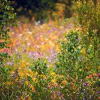 Шкатулка с самоцветами :: Татьяна Губина