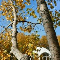Осень :: Виктор Гришенков