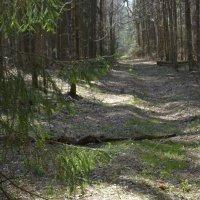 В апрельском лесу... :: mv12345 элиан