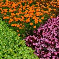 Разноцветие лета. :: Ольга