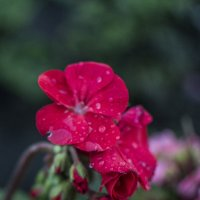 Красный :: Екатерина Погребная
