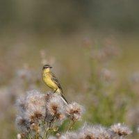 Птах №4 :: Pavel Stolyar
