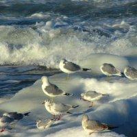 А нам не страшен ни вал девятый, ни холод вечной мерзлоты... :: Сергей Карачин