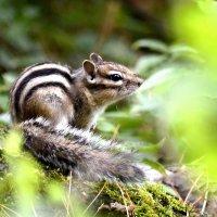 Мой лесной дружок :: Лариса Сливина