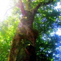 Дерево жизни :: Катя Бокова