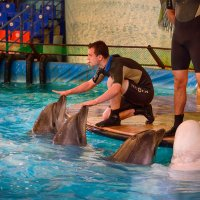Ап, дельфины у ног моих встали :: Ю Д