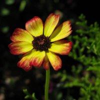 Цветик-семицветик... :: ТАТЬЯНА (tatik)