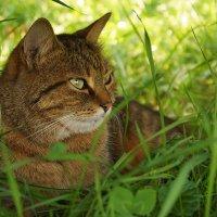 шикарная кошка :: ирина Лепейко