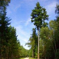 Дорожка в парке :: Дмитрий Сорокин