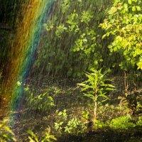 дождь в макро-мире :: Валентина Илларионова (Блохина)