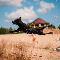 Весёлый пёсик :: Valeriy Shyshkin