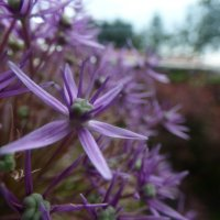 flower dream :: Veronika Lysenko