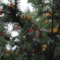 Осень в Баттенберге :: Evgeny