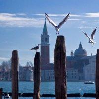 Венецианские чайки :: Юрий Вайсенблюм
