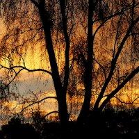 Закаты,восходы...ликует природа... :: veilins veilins