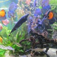 Подводный мир :: Самохвалова Зинаида