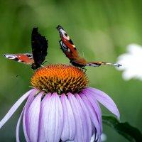 вальс на цветке :: ник. петрович земцов