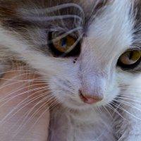 Котик :: Ирина