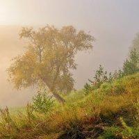 Утро :: Геннадий С.