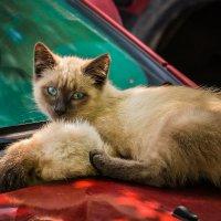 Дикие котята на моей машине :: Марк Э