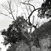 дрова на скале :: Natalya
